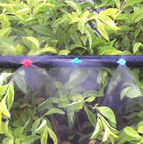 Fogger with thread for landscape water misting in green